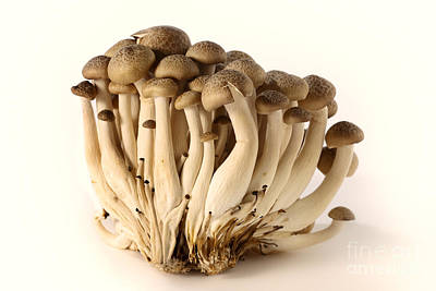 Photograph - Brown Beech Mushrooms by Paul Cowan