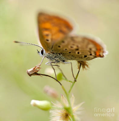 Brown Blurry Butterfly  Art Print by Jaroslaw Blaminsky