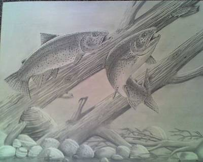 Brown Trout Drawing - Brown Brothers by Willem Bome