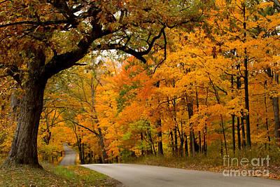 Photograph - Brown County Foliage 1 by Jim McCain