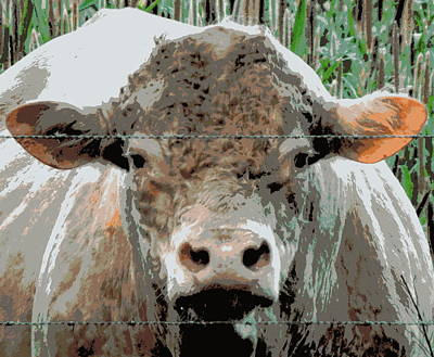 Photograph - Brown Cow by Sheri McLeroy