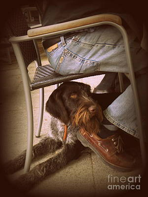 Art Print featuring the photograph Brown Dog by Tanya  Searcy