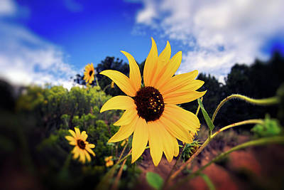 Photograph - Brown Eyed Susan by Sandra Selle Rodriguez