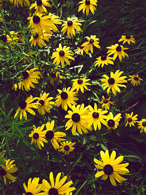 Mixed Media - Brown Eyed Susans by Connie Dye