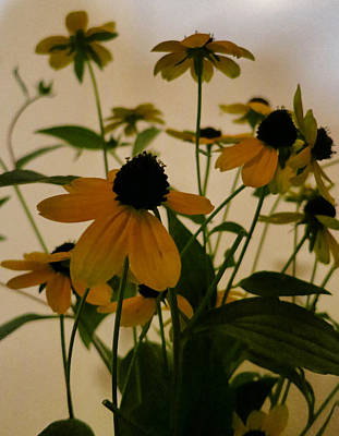 Photograph - Brown Eyed Susans by Patricia Januszkiewicz