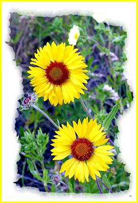 Photograph - Brown- Eyed Susans by Will Borden