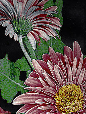 Photograph - Brown Flowers - Digtal Painting by Merton Allen