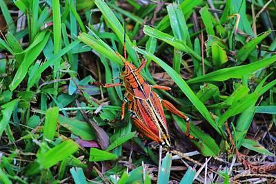 Brown Grasshopper Art Print by Chuck  Hicks