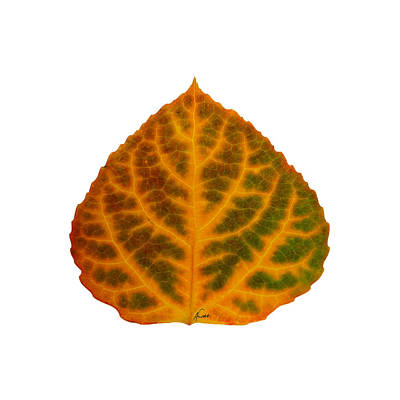 Digital Art - Brown Green Orange And Red Aspen Leaf 1 by Agustin Goba