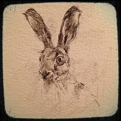 Hop Drawing - Brown Hare by Ann Pease