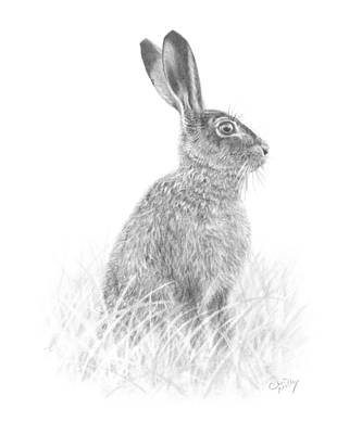 Drawing - Brown Hare by Chris Mosley