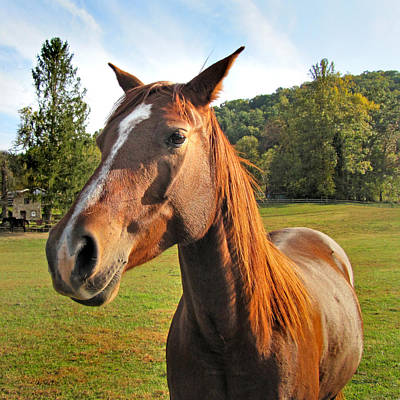 Photograph - Brown Horse In Etowah by Duane McCullough