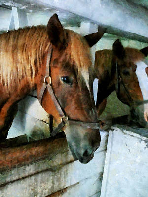 Photograph - Brown Horse In Stall by Susan Savad