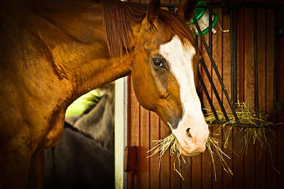 Photograph - Brown Horse by Joann Copeland-Paul