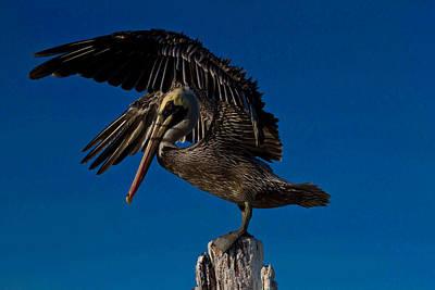 Brown King Pelican Art Print by Kristine Patti