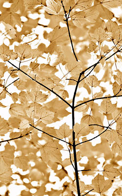 Brown Leaves Melody Art Print by Jennie Marie Schell
