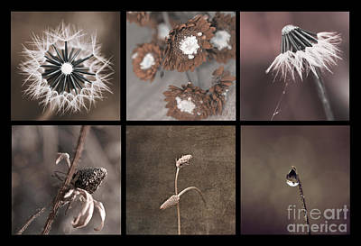Photograph - Brown Multitychs by Aimelle