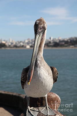 Frisco Pier Photograph - Brown Pelican At The Torpedo Wharf Fising Pier Overlooking The City Of San Francisco 5d21685 by Wingsdomain Art and Photography