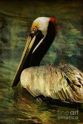Deborah Brown Photograph - Brown Pelican Beauty by Deborah Benoit
