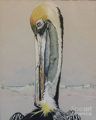 Drawing - Brown Pelican  by Nancy  Parsons