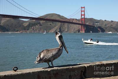 Brown Pelican Overlooking The San Francisco Golden Gate Bridge 5d21670 Art Print
