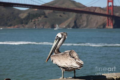 Frisco Pier Photograph - Brown Pelican Overlooking The San Francisco Golden Gate Bridge 5d21672 by Wingsdomain Art and Photography
