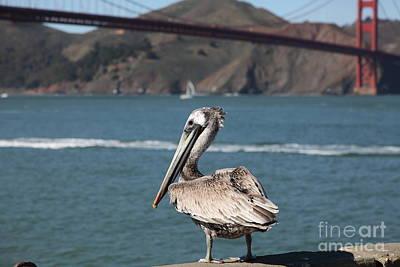 Brown Pelican Overlooking The San Francisco Golden Gate Bridge 5d21672 Art Print