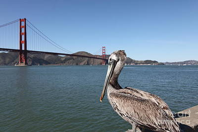 Frisco Pier Photograph - Brown Pelican Overlooking The San Francisco Golden Gate Bridge 5d21683 by Wingsdomain Art and Photography