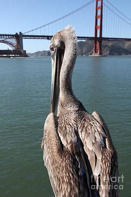 Brown Pelican Overlooking The San Francisco Golden Gate Bridge 5d21700 Art Print
