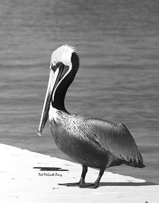 Photograph - Brown Pelican by Pat McGrath Avery