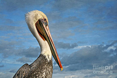 Photograph - Brown Pelican Portrait by Gabriele Pomykaj