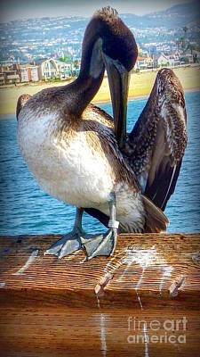 Photograph - Brown Pelican Preen  by Susan Garren