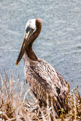 Digital Art - Brown Pelican by Photographic Art by Russel Ray Photos