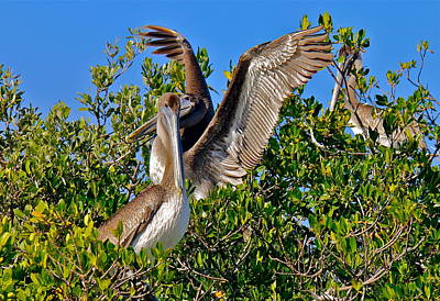 Photograph - Brown Pelicans by Denise Mazzocco