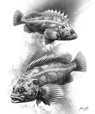 Sport Fishing Digital Art - Brown Rockfish Pair by Javier Lazo