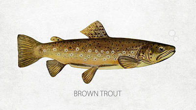 Catching Digital Art - Brown Trout by Aged Pixel