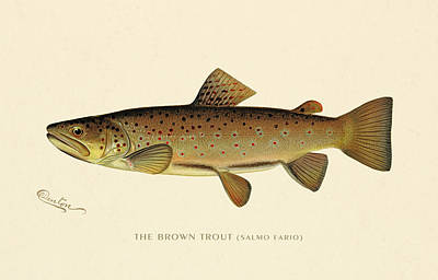 Painting - Brown Trout by Gary Grayson