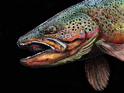 Brown Trout Drawing - Brown Trout Head Shot No. 1 by Brian Murphy