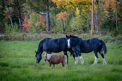 Photograph - Brownfield Horses by Jennifer Kano