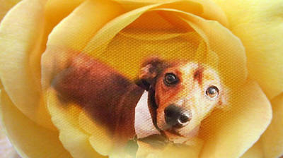 Pup Digital Art - Brownie Flower by Joanna Schultz