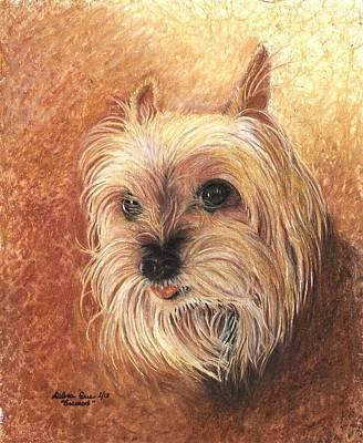 Yorkie Drawing - Bruiser by Debra Sue  Waters
