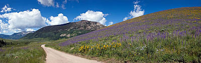 Delphinium Photograph - Brush Creek Road And Hillside by Panoramic Images