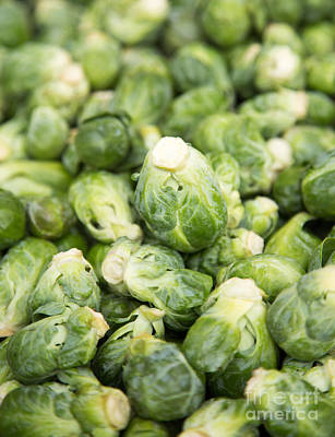 Cabbage Wall Art - Photograph - Brussel Sprouts by Rebecca Cozart