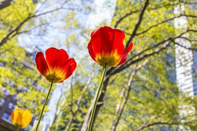 Bryant Park Tulips New York  Art Print by Angela A Stanton