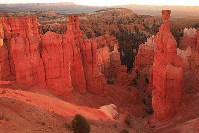 Photograph - Bryce Canyon Amphitheater by Alan Vance Ley
