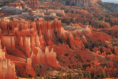 Photograph - Bryce Canyon Amphitheater In Morning Light by Alan Vance Ley