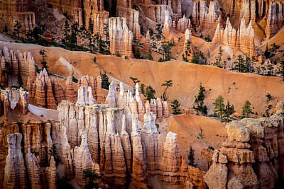 Photograph - Bryce Canyon Hoodoos by Dave Cleaveland