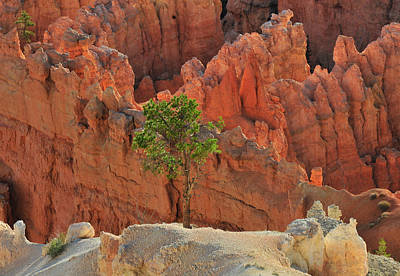 Photograph - Bryce Canyon Lone Tree by Ginger Wakem