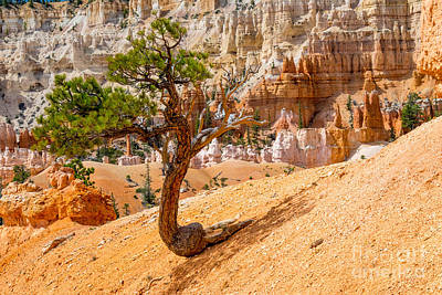 Bryce Canyon Np Art Print by Juergen Klust