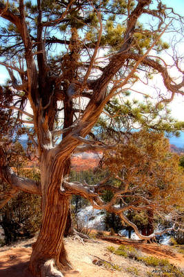 Photograph - Bryce Canyon Old Tree by Marti Green